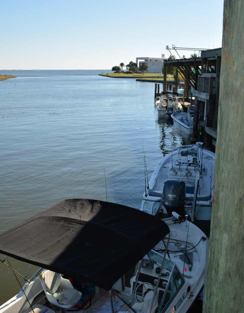 Not far to open water rigolets marina for Canal bait and tackle fishing report